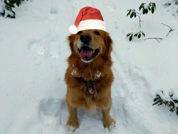 Merry Christmas! 22