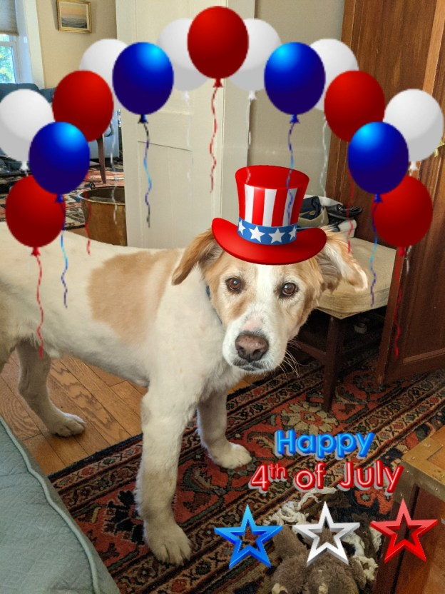 Patriotic Pups for the Fourth of July 1
