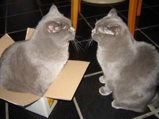 2009-01-06 - Casper en Sem