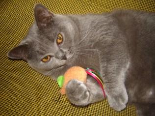 2009-06-09 - Sem met muis (2)