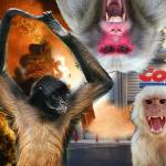 Coconut-picking monkeys riot COSTCO after PETA forces thousands of job losses