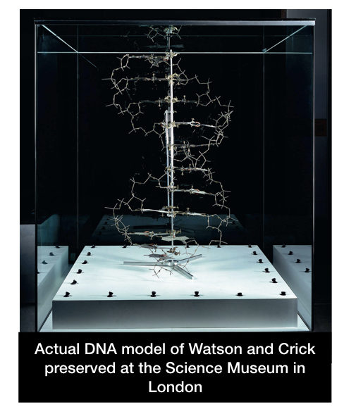 The original DNA model proposed by Watson and Crick