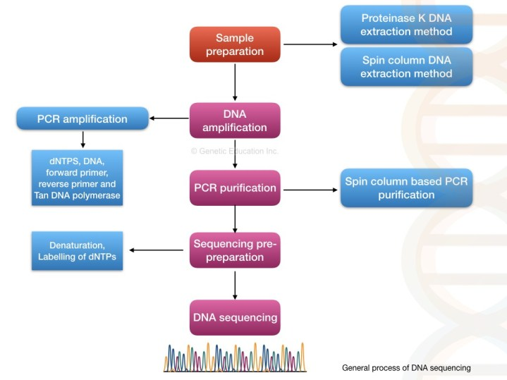 Steps in DNA sequencing