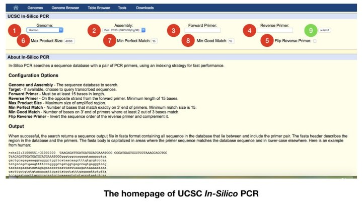 "A comprehensive guide on ""How to do In Silico PCR"""