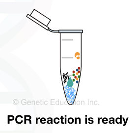 PCR reaction: Ten secrets that nobody tells you