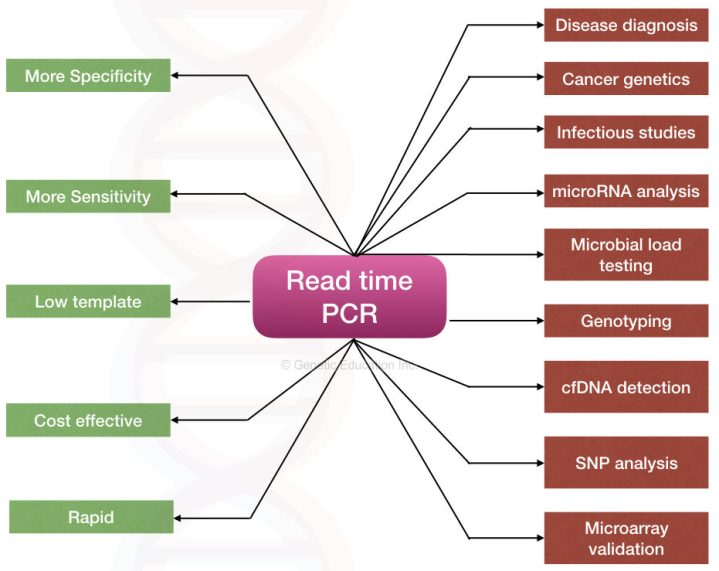 Real-time PCR: Principle, Procedure, Advantages, Limitations and Applications