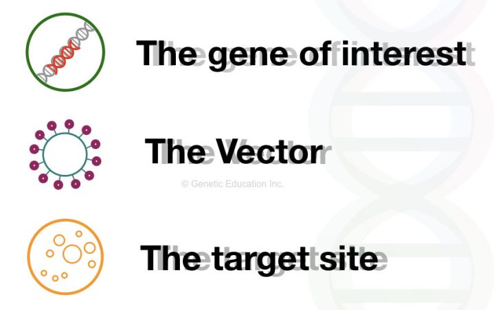 The main three component of gene therapy