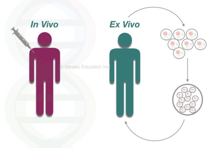 The in vivo and ex vivo gene therapy