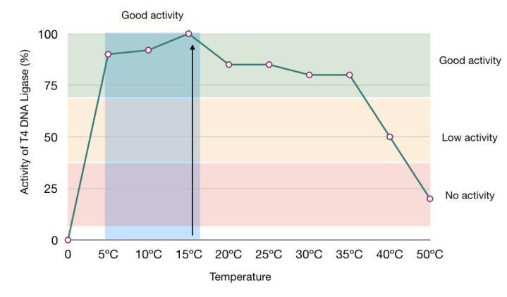 The temperature vs activity graph of T4 DNA ligase