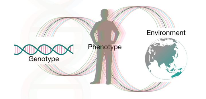 The interaction between gene and environment creates different phenotypes.