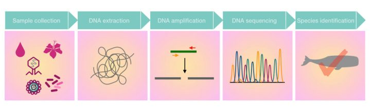 Pictorial illustration of the process of environmental DNA analysis.
