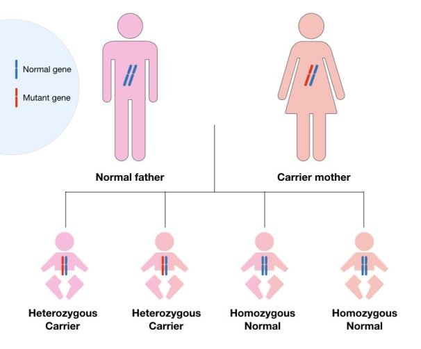 The inheritance pattern of cystic fibrosis