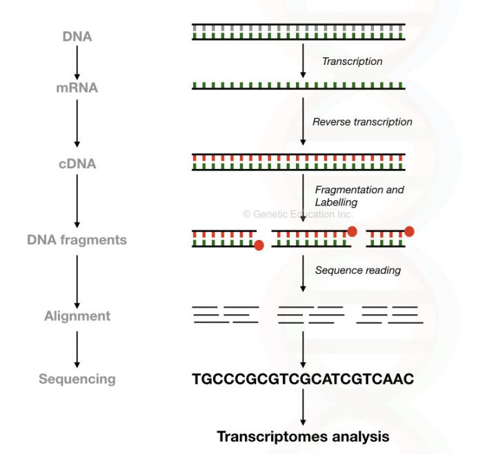 Brief overview of the entire process of RNA-seq.
