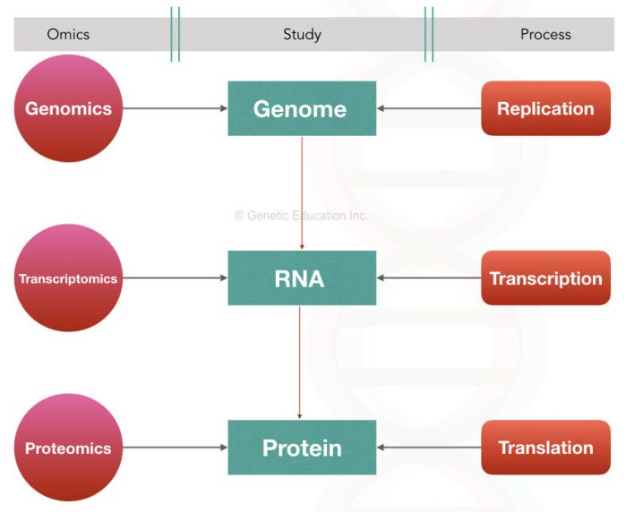 The graphical representation of genomics, transcriptomics and proteomics.