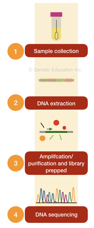 The procedure of genetic testing for breast cancer.
