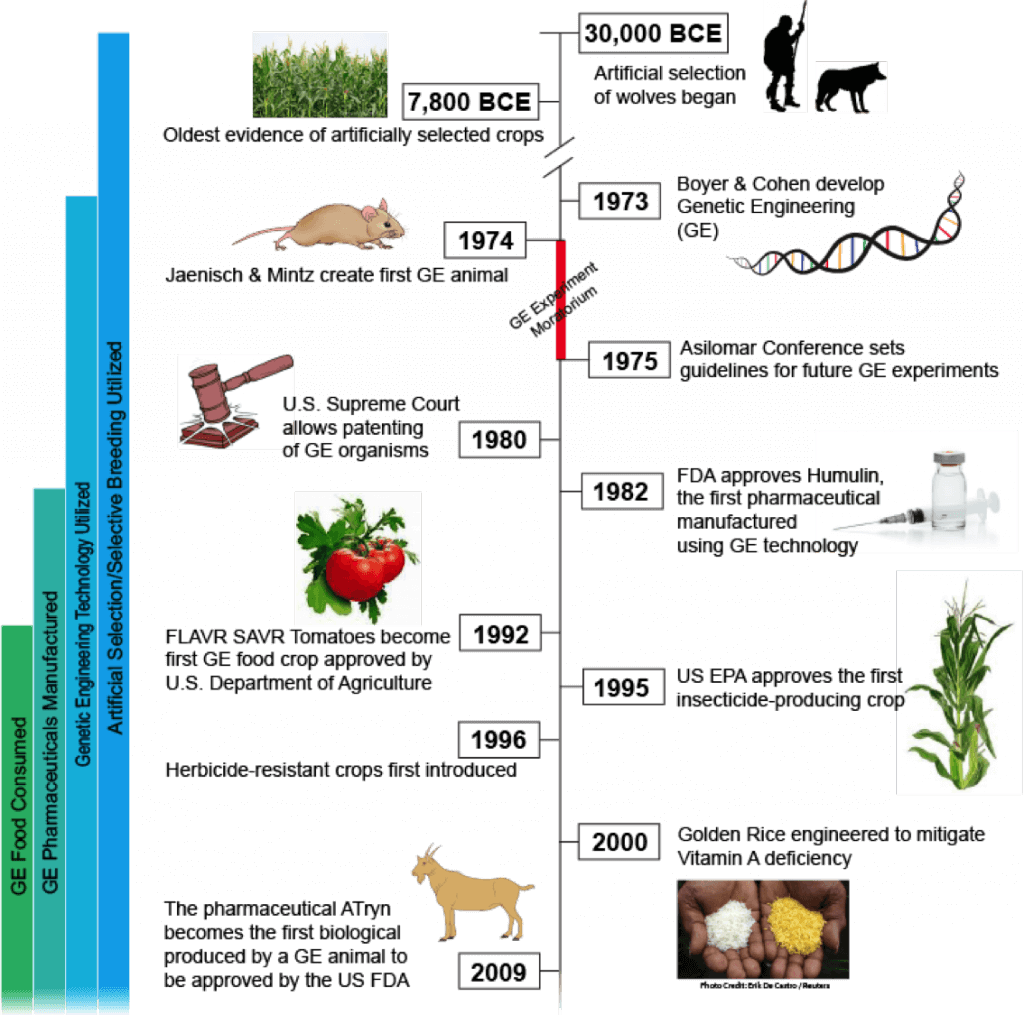 A Short History Of Gmos From Prehistoric Times To Today