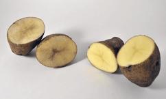 non browning potato crispr 382377