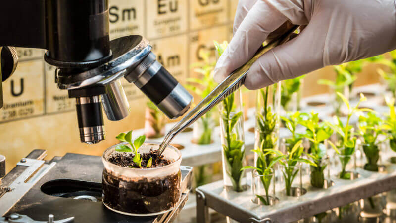 Biotechnology crops have contributed to global food security – Expert