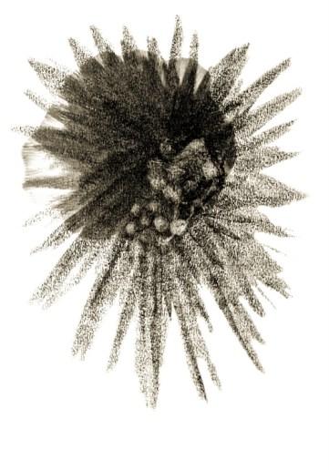 Metamorphosis 3 - Graphite on Paper