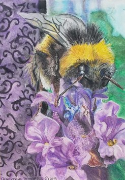 Bee on Lavender - Fabriano accademia - Spectrum Noir pencils