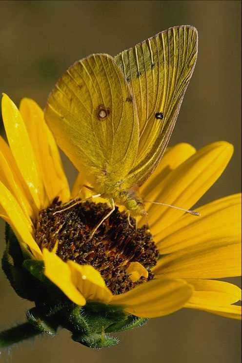 Cute Pictures Of Butterflies Part 1 Cute Pictures