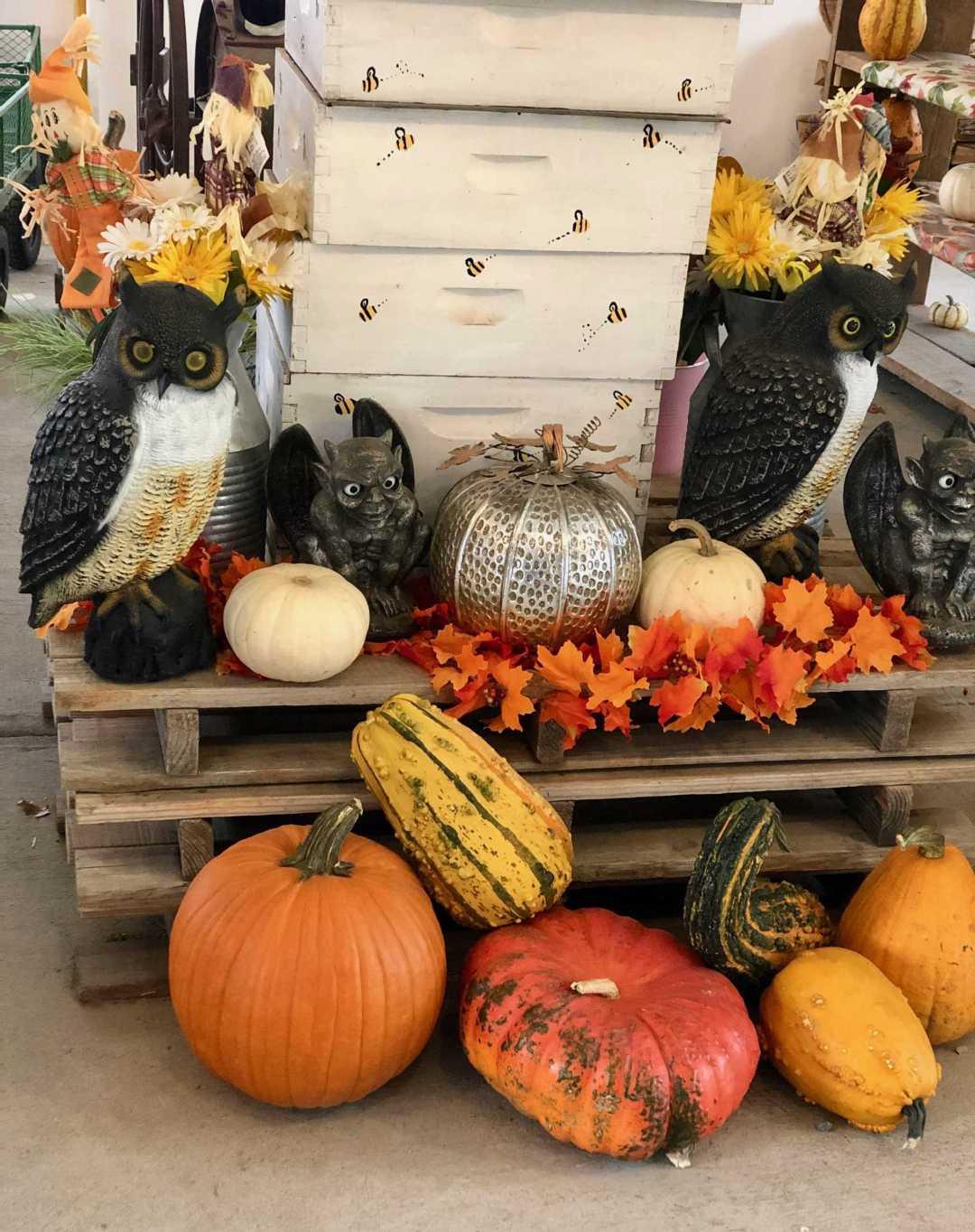 a close of pumpkins and decor in a farm shop