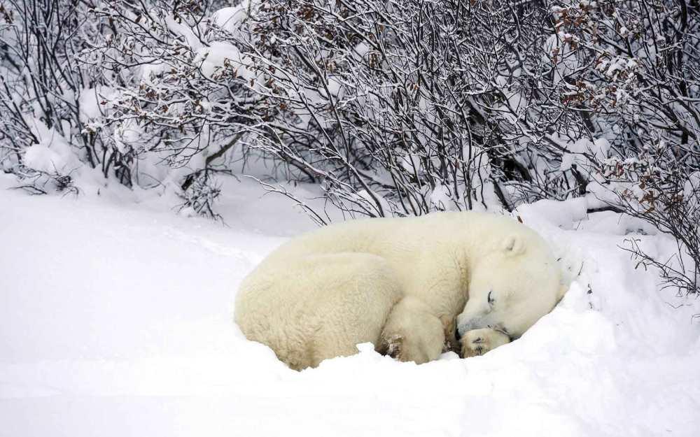 Sommeil hivernal et digestion