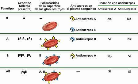 grupos-sanguineos-2
