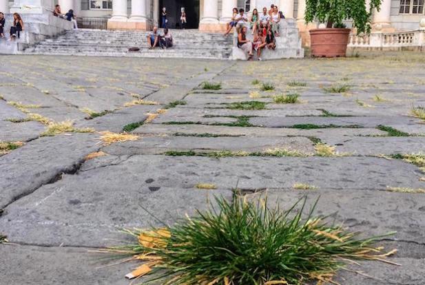 erbacce in centro Palazzo Ducale
