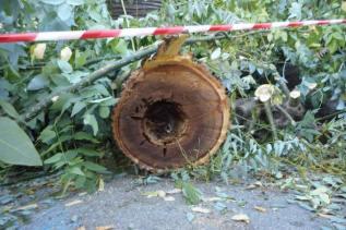 albero-tagliato-piazza-paolo-da-novi