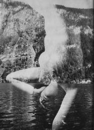 Franz Roh, senza titolo, 1926_1930, fotografia, sovrimpressione