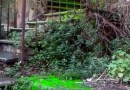 Castelletto, perde una fogna e la scalinata si trasforma in una scivolosa e maleodorante cascata verde. Chiusa dalla Municipale