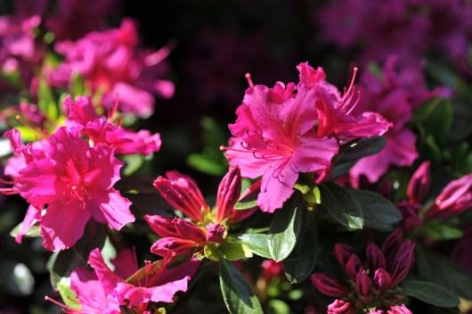 fiori (1)