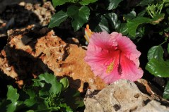 fiori (11)