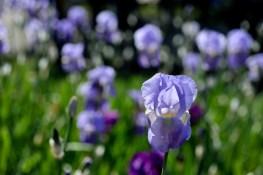 fiori (16)