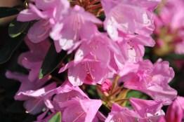 fiori (4)