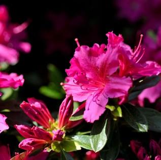 fiori (53)