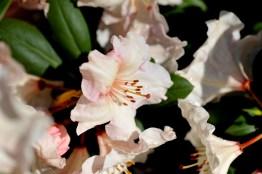 fiori (8)