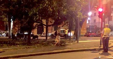 Stasera i cinghiali scesi dal Righi grufolano in piazza Manin