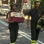 Animali nelle case evacuate, i vigili del fuoco soccorrono anche loro