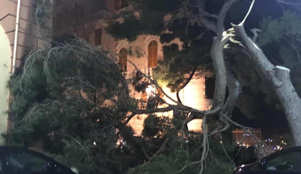 Vento forte su Genova danni in diverse zone. Albero si spezza a Castelletto