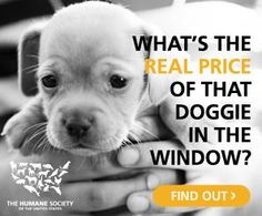 puppy in window hsus
