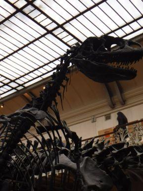 PG.Paris.Natural History Museum010
