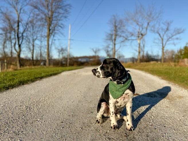 Vermont dog