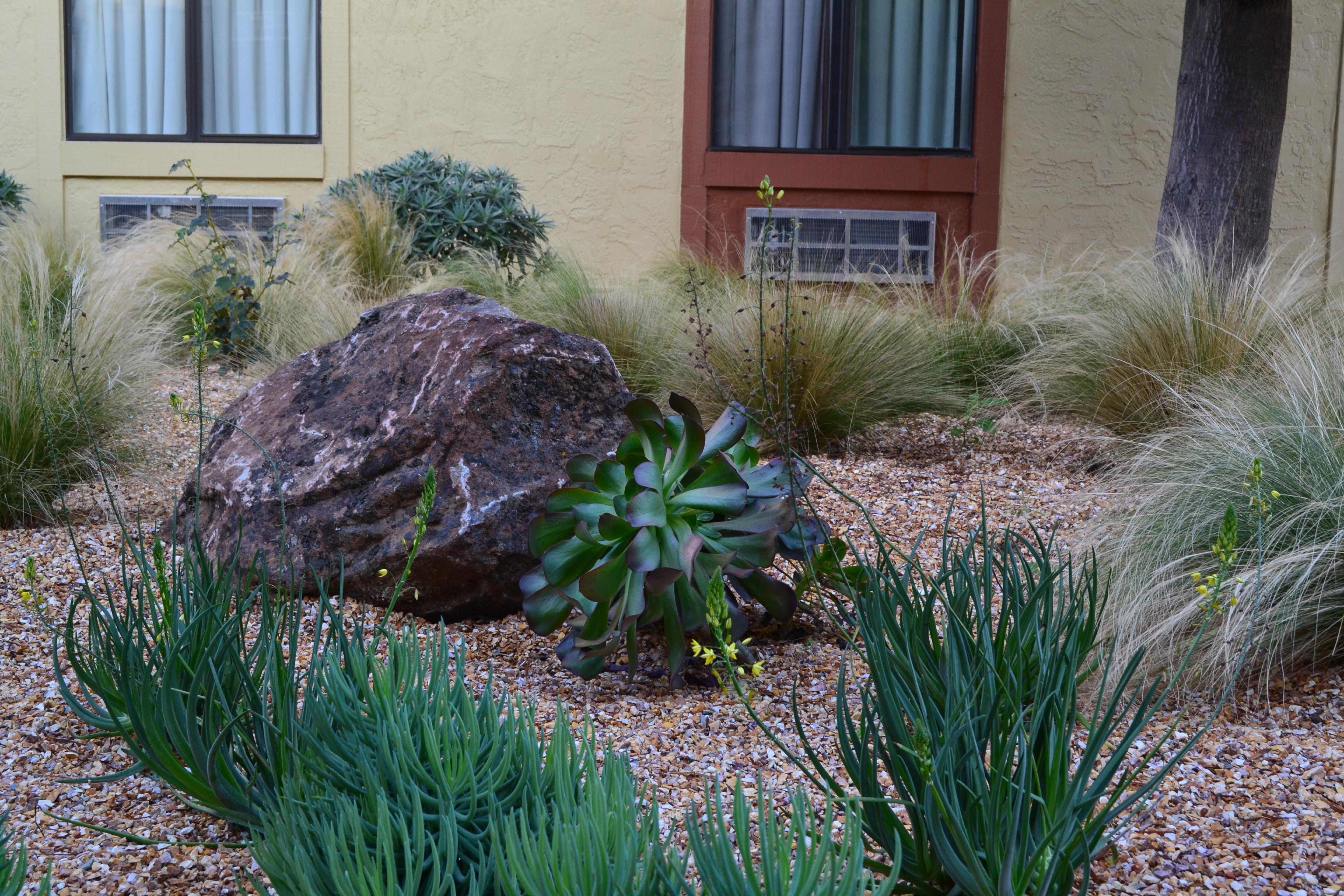 Drought Resistant Landscape at Hotel Drought Tolerant Landscape