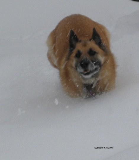 Joy of running in deep snow makes me smile.