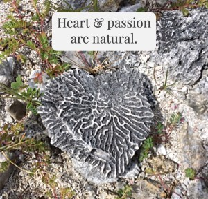 Photo of a heart-shaped piece of coral