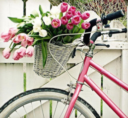 Eight Reasons to Start Riding a Bike