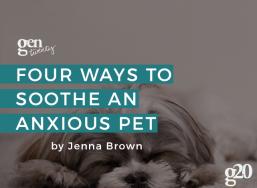 4 Ways To Soothe an Anxious Pet