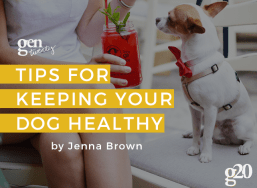 Tips For Keeping Your Dog Healthy